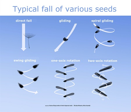The design of the seeds is inspired by nature.